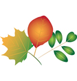 Colorful leaves vector image