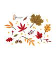 autumn foliage hand drawn set vector image vector image