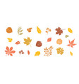 autumn leaves set fall leaf floral icons over vector image vector image