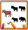find the correct shadow buffalo animal education vector image