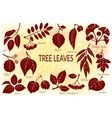 Leaves of Plants Pictogram Set vector image vector image