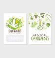 medical cannabis card templates set natural hemp vector image vector image