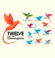 modern set colorful birds colibri hummingbird vector image