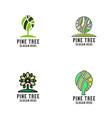 pine tree logo vector image vector image