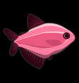rose fish on black background vector image vector image