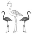 set of of flamingos vector image vector image