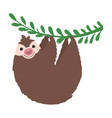 sloth on a branch vector image vector image