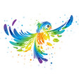 splash colorful fantasy bird vector image vector image