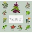 Useful varieties of herbs big set vector image vector image