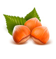 filberts with leaves vector image vector image