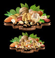 mix different types nuts vector image