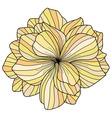 Yellow Begonia flower on white background vector image vector image