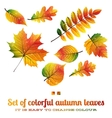 set colorful autumn leaves eps 10 vector image vector image
