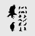 Eagle Set Silhouettes vector image
