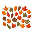 decorative leaves set autumn leaf fall concept vector image vector image