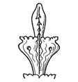 finial is an ornament generally carved to vector image vector image