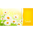 Nature background with fresh daisy vector image vector image