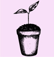 young plant pot vector image