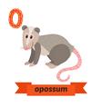 Opossum O letter Cute children animal alphabet in vector image vector image