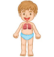 Respiratory system in human boy vector image