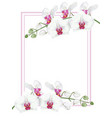 white orchids with frame vector image vector image