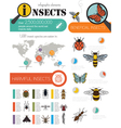 Insects infographic template vector image