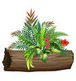 bird paradise and ferns on white background vector image vector image