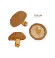collection of shiitake mushroom and a bit of vector image vector image