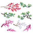 japanese maple korean pine and blooming tree vector image vector image