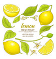 lemon elements set vector image