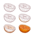 Set of juicy orange on a white background vector image