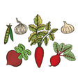 vegetable set sketch vector image vector image