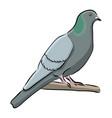 hand drawn bird grey dove vector image