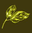 apple leaves vector image