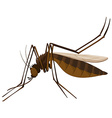 Brown mosquito on white background vector image vector image
