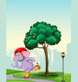 elephant playing roller skate in park vector image vector image
