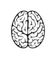 Brain top view vector image