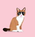 Adorable sitting brown cat on pink background