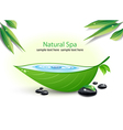 Natural Spa Background vector image