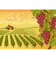 Vineyard valley landscape vector image vector image