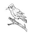 Crow Sketch vector image