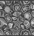 collection of seashells drawn vector image