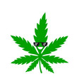 funny smiling happy cool marijuana vector image