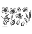 set hand drawn black and white almond vector image vector image