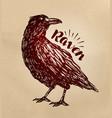 vintage drawn raven crow bird sketch vector image