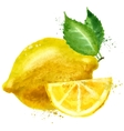 lemon logo design template fruit or food vector image vector image