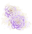 Violet roses on white background vector image