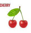 Cherry isolated on white background vector image