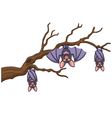 Happy cartoon bat hanging on tree vector image vector image