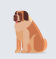 short-haired saint bernard dog icon furry human vector image vector image